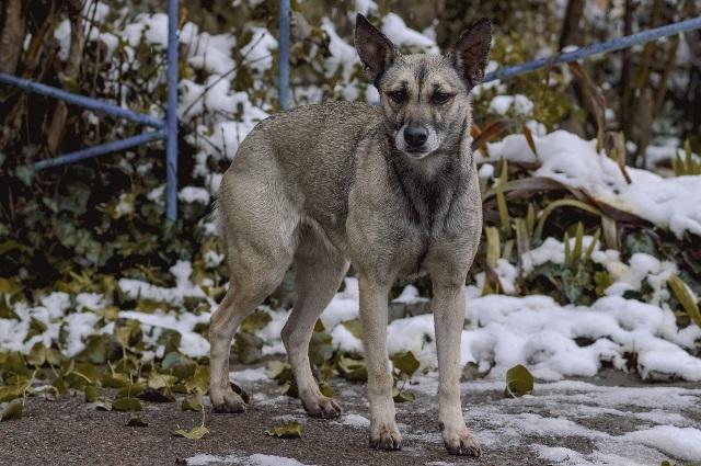Как помочь бездомным животным зимой?