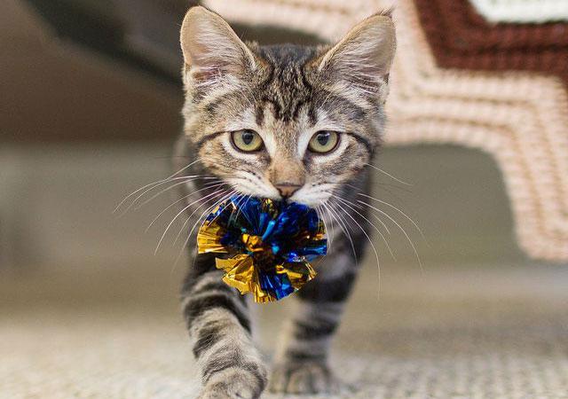 Как научить кошку приносить игрушки и предметы по команде.