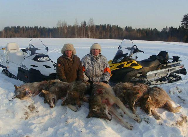 Охота на волка – оружие, экипировка, лицензия и способы.