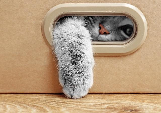 Как подготовиться к появлению котенка.