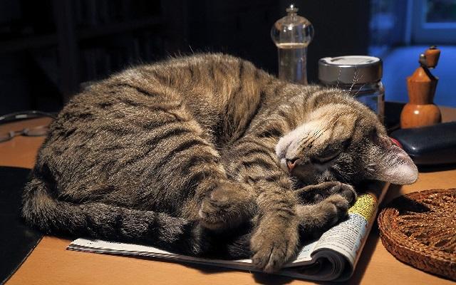 Сколько должна спать ваша кошка?