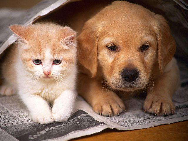 5 эффективных средств от запаха мочи кошек и собак.