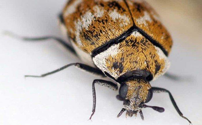 насекомые паразиты человека и животных перевозбуд заболеваеий